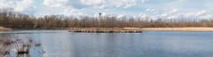 Bird Island (Cheryl3001) Tags: pano bird island nature center water lagoon geese landscape fujifilm 50140mm f2 xt2