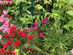 des-fleurs© (alexandrarougeron) Tags: photo alexandra rougeron flickr fleurs nature plante végétal végétale ville beauté couleur frais