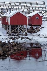 Cabins in Reflection (David Canon) Tags: fishermen reflection lofoten cabin svolvær norway fishracks snow sea water