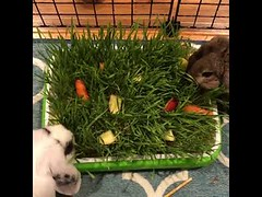 its dinner times - cute bunny (tipiboogor1984) Tags: aww cute cat funny dog youtube