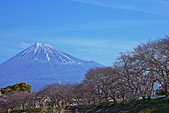 Ryuganbuchi and Mt.Fuji (ULTRA Tama) Tags: cherry blossoms will bloom soon ryuganbuchi mtfuji mtfujiwhc japan shizuoka fuji todays dayliphoto instadaily photogenic igjapan loversnippon worldcaptures flickrfriday 2019 worldheritage tabijyo genicmag retripjapan retripshizuoka explorejapan traveljapan radiof artofimages ftimes genictravel geniclife genicblue genicjapan genicphoto genictown genicsummer tabijyosummer tabijyomaptwn tabijyotravel flickrheroes brilliant flickr celebrities natural decay macro
