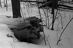 FRB No. 37 - Silberra Pan100 - Roll No. 3 (Rodinal) (Alex Luyckx) Tags: oakville ontario canada sheridan sheridancollege trafalgarroadcampus campus college institution mccrannyvalleypark mccranny valley trail hike creek walk winter snow cold filmreviewblog filmreview review media medium nikon nikonf2photomic slr 35mm 135 aisnikkor50mm114 silberra silberrapan100 pan100 asa100 blazinal rodinal 125 bw blackwhite epsonv700 adobephotoshopcc believeinfilm filmisalive filmisnotdead