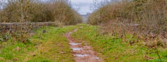 Marton Disused Railway 18th March 2019 (boddle (Steve Hart)) Tags: stevestevenhartcoventryunitedkingdomcanon5d4 marton disused railway 18th march 2019 steve hart boddle steven bruce wyke road wyken coventry united kingdon england great britain wild wilds wildlife life nature natural bird birds flowers flower fungii fungus insect insects spiders butterfly moth butterflies moths creepy crawley winter spring summer autumn seasons sunset weather sun sky cloud clouds panoramic landscape canon 5d mk4 100400mm is usm ii southam unitedkingdom gb