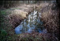 C'est la fin de l'hiver (Gauthier V.) Tags: olympusxa4 c200 rural végétal fossé cielbleu reflets pécrot brabantwallon belgium