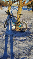 Winter Shadow (Bracus Triticum) Tags: winter shadow calgary カルガリー アルバータ州 alberta canada カナダ 12月 december 2018 平成30年 じゅうにがつ 十二月 jūnigatsu 師走 shiwasu priestsrun
