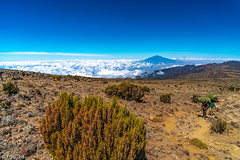 _FOU9611.jpg (Murray Foubister) Tags: africa gadventures spring treking tanazania flora travel 2018