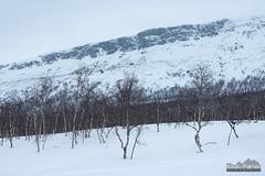 Saana and Birch Trees (kevin-palmer) Tags: kilpisjärvi finland finnishlapland arctic europe winter march snow snowy cold cloudy overcast nikond750 tamron2470mmf28 enontekiö birchtrees forest saana scandinavianmountains