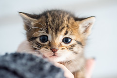 Baby kitten (Christy Turner Photography) Tags: