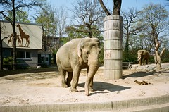 Berlin (iampaulrus) Tags: berlin germany mjuii olympusmjuii lomography portra kodak film filmphotography analog analogue 35mm 35mmfilmphotography film35mm elephant