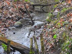 Bach im Winterwald (Sophia-Fatima) Tags: schmilau beiratzeburg schleswigholstein deutschland bach brook wald forest