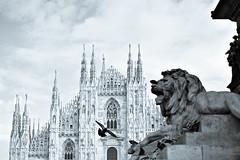 Milano (lorenzog.) Tags: milano piazzaduomo 50mm italy blackandwhite nikon d700 milan pidgeon birds duomodimilano