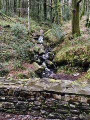 Ballonacourty Loop, Glen of Aherlow, Galtee Mountains (birdsrule) Tags: glen forest walk ireland