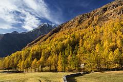Colore d'autunno (cesco.pb) Tags: simplonpass passodelsempione switzerland svizzera alps alpi vallese canon canoneos60d tamronsp1750mmf28xrdiiivcld autumn autunno montagna mountains