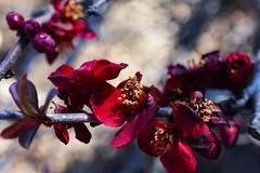 NEX_0343 (valerie something or other) Tags: carolina raleigh arboretum winter