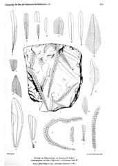 beitrgezurpal03wien_0205 (kreidefossilien2) Tags: velenovský bohemiancretaceousbasin bohemian czech republic palaeobotany flora kieslingswalde