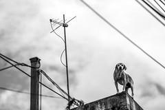 Morro do Quiabo, Itapevi-SP (Felipe F Barros) Tags: prefeitura do município de itapevi secretaria municipal desenvolvimento social e defesa da cidadania morro quiabo entrega cestas basicas acolher alimento doação canon canonitapevi canonbrasil canonsãopaulo euamoitapevi brasil sãopaulo câmera fotografia photography photographer photograph photo image imagem foto fotografo fotógrafos jornalismo fotojornalismo imprensa press nationalpress statepress worldpress journalism photojournalism documental felipebarros felipefbarros pretoebranco blackandwhite littledoglaughednoiret