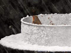 Juchhe-juchhe-juchhe wir haben Schnee ❄️❄️❄️ (BrigitteE1) Tags: robin snow backyard bird snapshot