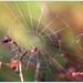 Nous tissons notre destin, nous le tirons de nous comme l'araignée sa toile. François Mauriac
