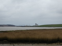UK - Essex - Near Purfleet - Reedbed by River Thames (JulesFoto) Tags: uk england northeastlondonramblers essex purfleet riverthames reedbed