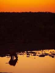 PA171246 (bartlebooth) Tags: namibia etosha animal safari africa southernafrica wildlife olympus e620 etoshanationalpark rhino rhinoceros sunset waterhole hilali silhouette