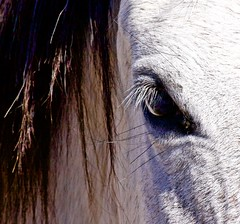 Salt River Horse (f/ames) Tags: horses closeup eye saltriver arizona wildhorses nature beauty canon5d mkii