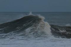 IMG_0665 (monika.carrie) Tags: monikacarrie wildlife scotland aberdeen waves
