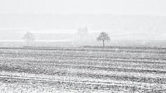 Winter... (Ody on the mount) Tags: anlässe bäume em5ii fototour landschaft mzuiko4518 omd olympus pflanzen schnee winter bw landscape monochrome sw snow trees