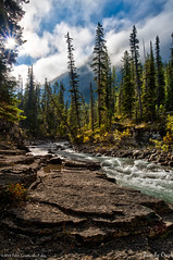 Beauty Creek (pDOTeter) Tags: ifttt 500px canada peter photography personen luxem river beauty creek canadian rockies clouds clearing icefield parkway pkwy jasper national park sunburst sunrays sunwapta trees peterphotography peterluxem beautycreek canadianrockies cloudsclearing icefieldparkway icefieldpkwy nationalpark alberta