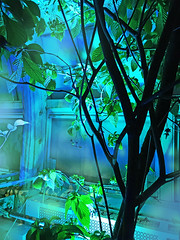 Conservatory of Flowers Night Bloom event lights color effect (Aqua and Coral Imagery) Tags: tree plants colors color colorful nature green blue imagery effect inspo lights glow sparkle indoors conservatory lighting magic