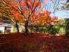 西芳寺(苔寺) Moss garden of Saihoji (Eiki Wang) Tags: 西芳寺 西芳寺さいほうじ 苔寺 苔寺こけでら 京都 世界遺產 楓 紅葉 momiji kokedera kyoto saihoji