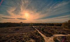 One path to the Sun, one path to Darkness. (Alex-de-Haas) Tags: 11mm adobe adobelightroom aurorahdr aurorahdr2019 blackstone d850 dutch europa europe european hdr holland irix irix11mm irixblackstone lightroom limburg molenhoek mook mookerheide nederland nederlands netherlands nikon nikond850 skylum autumn beautiful beauty bomen boom bos cirrus cloud clouds colorful colourful fall forest heide herfst landscape landschaft landschap mooi nature natuur park pretty schoonheid sky skyscape sundown sunset tree trees warm wolk wolken woods zonsondergang katwijk northbrabant nl
