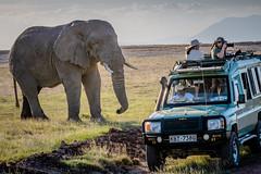 Missing the Obvious (helenehoffman) Tags: elephant africa landrover safari amboselinationalpark photographers loxodontaafricana africanbushelephant kenya animal