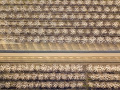 Walnut Orchards and Irrigation (Jeff Carlson) Tags: aerial agriculture california dixon dji drone farm mavic mavicpro orchard overhead quadcopter rural trees walnut walnuttrees