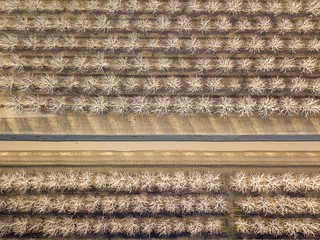 Walnut Orchards and Irrigation