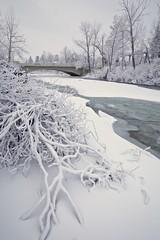 Groundhog day 2019 2 (John Andersen (JPAndersen images)) Tags: bluehour bowriver bridge calgary canon cityskyline cold evening steam trees winter