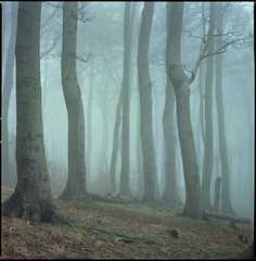 as far as (steve-jack) Tags: hasselblad 501cm 150mm kodak ektar 100 film 120 6x6 medium format woods woodland forest trees mist tetenal c41 kit epson v500