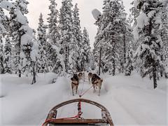 DogSledge_93360 (uwe_cani) Tags: panasonic g9 finnland finland skandinavien scandinavia lappland lapland ylläs winter schnee snow natur nature outdoor landschaft landscape bäume trees hunde dogs husky huskies schlitten sledge hundeschlitten dogsledge