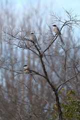 XT3B8937 (jojotaikoyaro) Tags: zenpukuji suginami tokyo japan bird animal nature wildlife fujifilm xt3 xf100400mm