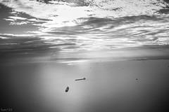 海 (fumi*23) Tags: ilce7rm3 sony sel35f28z sonnar 35mm monochrome tokyo bw blackandwhite sea water bay sky tokyobay ship sonnartfe35mmf28za a7r3 東京湾 東京 モノクロ ソニー