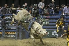 First Ride (Casey Lynn Photos) Tags: 2019 2019copyright bull bullriding professional bullrider action actionphotography bucking dayton daytonohio pbr velocitytour canonphotography canonusa canonlens canonphoto canonphotos canon7dmii canon