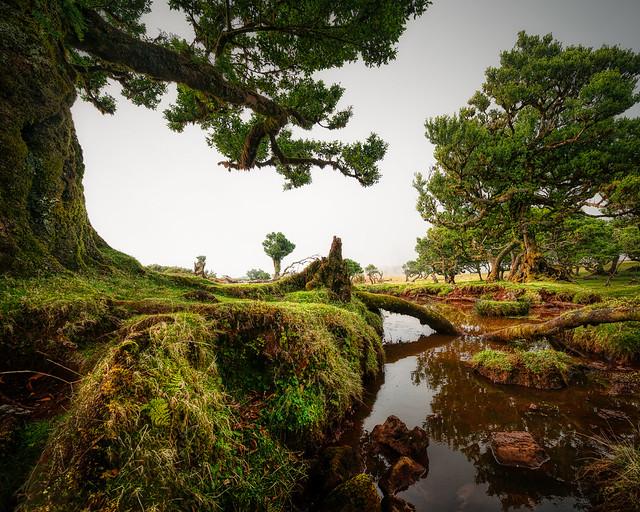 Madeira - Fanal
