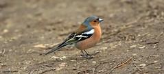 J78A0148 (M0JRA) Tags: birds humber ponds lakes people trees fields walks farms traylers