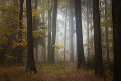 Why forest? (Petr Sýkora) Tags: les mlha podzim nature forest trees autumn mist atmospheric