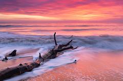 Sunrise at Covehithe Suffolk. (Albert's Photo's) Tags: sunrise covehithe sea beach water north east anglia graham shaw tree blue hour lee canon 5d mkiv suffolk uk coast