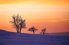 Trees in the morning (A.K. 90) Tags: trees bäume landscape landschaft minimalistisch minimalistic outside morning redorangeyellow cloudsstormssunsetandsunrises rot gelb nature natur winter snow schnee sonyalpha6300 e18135mm3556oss sky himmel morgens