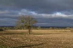 Morning 020319_DSC3236 (Leslie Platt) Tags: exposureadjusted straightened cropped tarporley cheshirewestchester redhillcottages