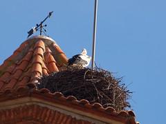 Segrià_La Granja d'Escarp_06 (Jordimac) Tags: aitona lagranjadescarp segrià catalunya paisatge patrimonicultural patrimoninatural primavera spring