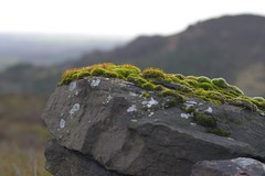 Microcosm_1 (Tony Tooth) Tags: nikon d7100 sigma 70mm moss rock countryside wall theroaches upperhulme staffs staffordshire staffordshiremoorlands