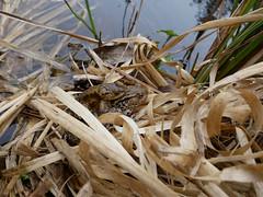 Two Toads. (dave p brecks) Tags: toads olympus918 panasonicdmcg80