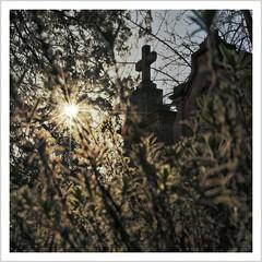 only silence remains (Norbert Kaiser) Tags: friedhof cemetery kirchhof dresden loschwitz dresdenloschwitz kreuz cross sachsen saxony grab grave grabstein grabkreuz gravestone grabmal